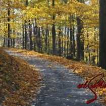 Photo by Rebecca Wilcox<br><br>Country Road in Wheeling, West Virginia