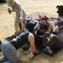 FALL Fox Hunt 2012 04