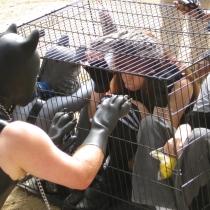 FALL Fox Hunt 2012 05