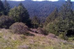 Muir Woods February 2013