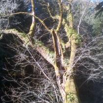 Muir Woods 17
