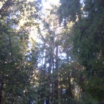 Muir Woods 16