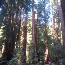 Muir Woods 19
