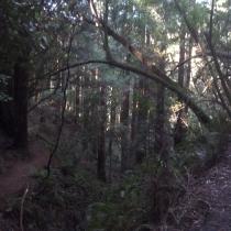 Muir Woods 02