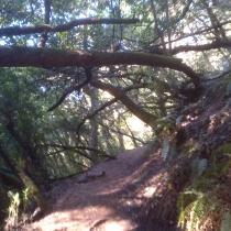 Muir Woods 01