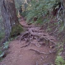 Muir Woods 07