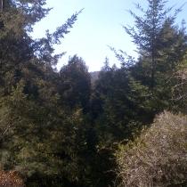 Muir Woods 08