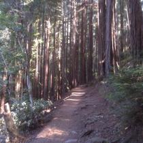 Muir Woods 06