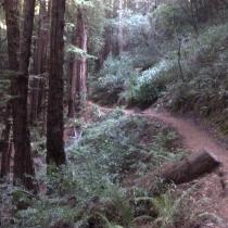 Muir Woods 14