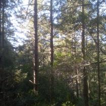 Muir Woods 15