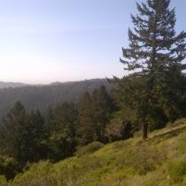 Muir Woods 13
