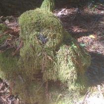 Muir Woods 20