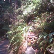 Muir Woods 21