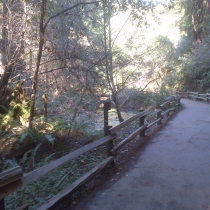 Muir Woods 22