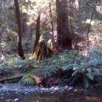 Muir Woods 23