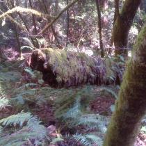 Muir Woods 24