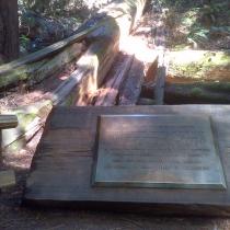 Muir Woods 25