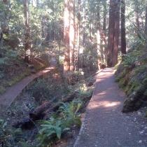 Muir Woods 26