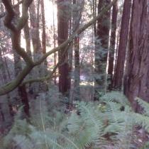 Muir Woods 27
