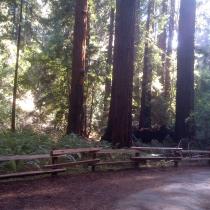 Muir Woods 28