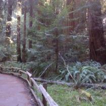 Muir Woods 29