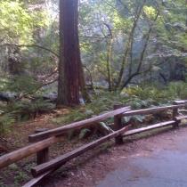 Muir Woods 30