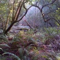 Muir Woods 32