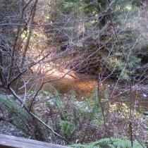 Muir Woods 33