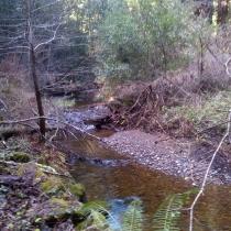 Muir Woods 34