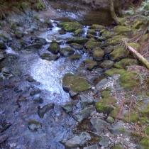 Muir Woods 36