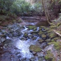 Muir Woods 37