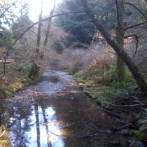Muir Woods 38