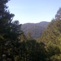 Muir Woods 39