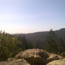 Muir Woods 40