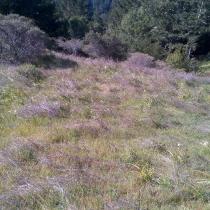 Muir Woods 43